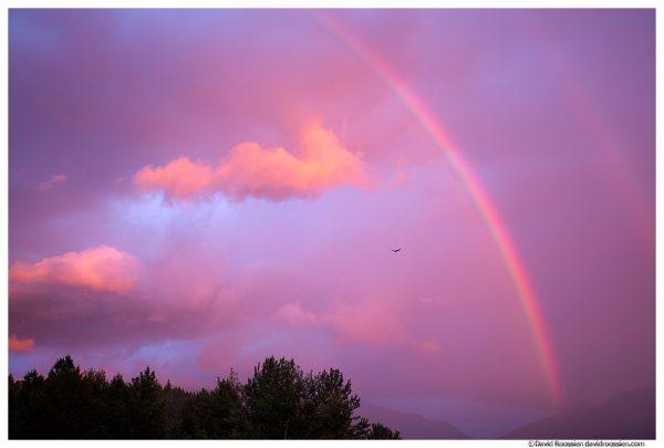 Bald Eagle and Rainbow, Lake Sammamish State Park, Washington State, Summer 2016