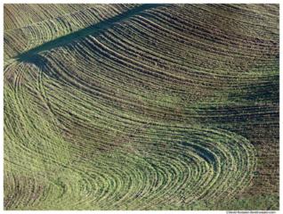 Green and Black Field, Palouse, Washington State