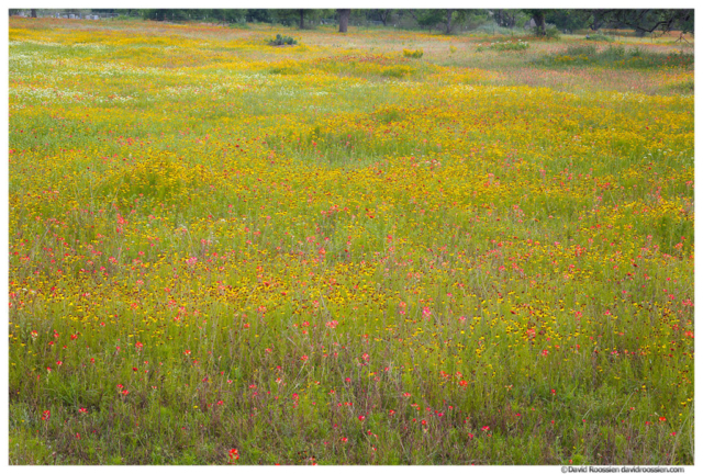 Field of Flowers, Cemetery, Marble Falls, Texas Hill Country, Spring 2017