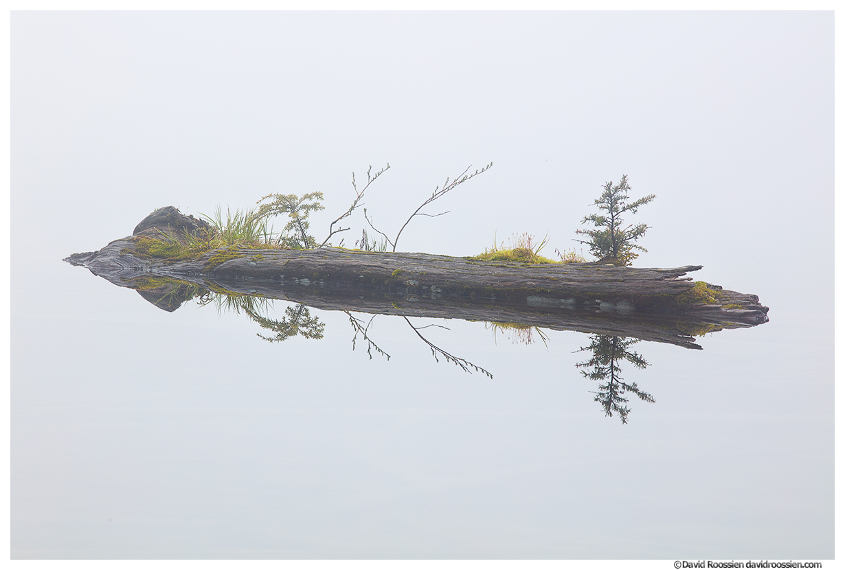 Levitating Log in the Clouds, Lake Twenty Two, North Cascades Mountain Loop Highway, Spring 2017