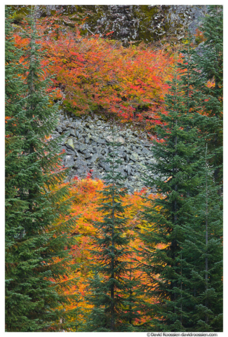 Talus Slope, Fall Colors, Groundcover, Snoqualmie Pass, Washington