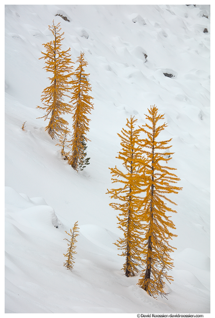Larches, Snow, Ingalls Pass, Lake Ingalls, Cle Elum, Washington, Esmeralda Basin, Fortune Pass, Alpine Lakes Wilderness, Snoqualmie Region, Salmon La Sac, Teanaway, Mount Stuart, Teanaway Road, FR 9737, North Fork Teanaway Road, Teanaway Campground