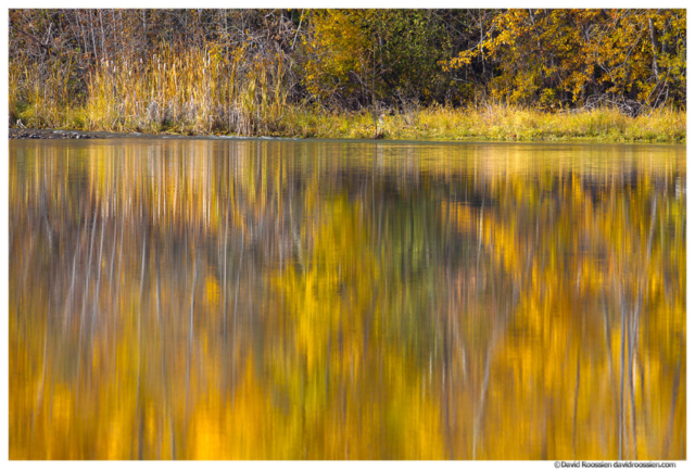 Cattails Reflection, pond, Cle Elum, fall colors, Kittitas County, Washington