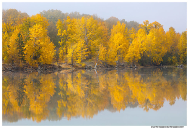 cottonwood, Yakima River, fall colors, reflection, Cle Elum, backwater, pond, Kittitas County, Washington