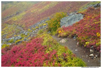 Hiking Trail, Yellow Aster Butte, Mount Baker Wilderness, Washington State