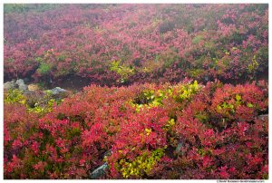 Colorful Divide, Yellow Aster Butte, Mount Baker Wilderness, Washington State