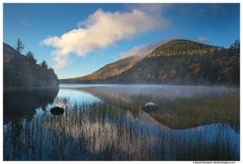Reflection Through the Reeds, Bubble Pond, Acadia National Park
