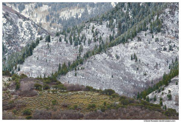 Foothills, Wasatch Mountains, Salt Lake City, Utah, Winter 2014