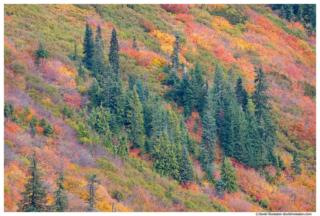 Fall Colors, Stevens Pass, Washington State