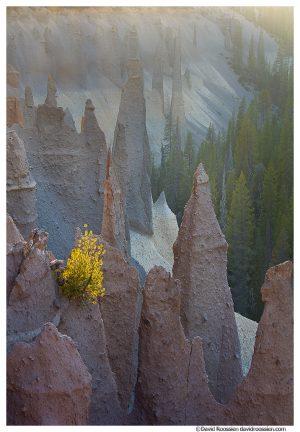 Backlit Baby Pine and Pinnacles, Crater Lake National Park, Oregon