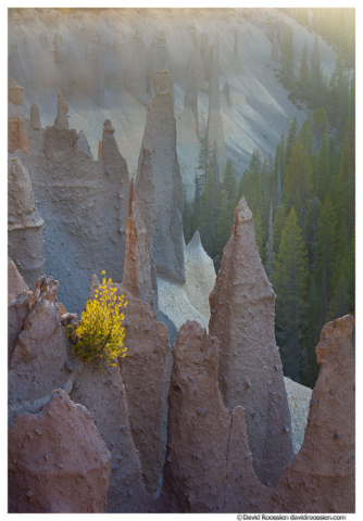 Backlit Baby Pine and Pinnacles, Crater Lake National Park, Oregon