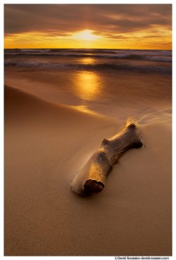 Driftwood Log, Lake Michigan, Ottawa County, Michigan