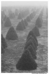 Tree Farm, West Olive, Ottawa County, Michigan