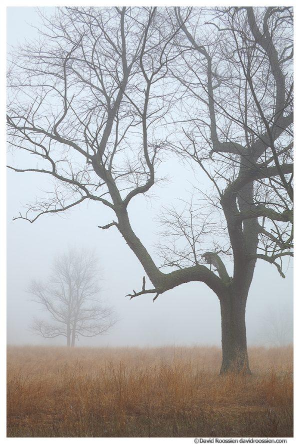 Trees and Foggy Field, Ottawa County, Michigan