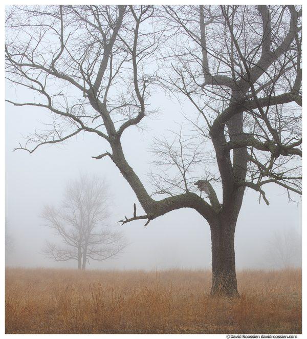 Trees and Field, Ottawa County, Michigan