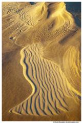 Dune Top Detail, Oceana County, Michigan