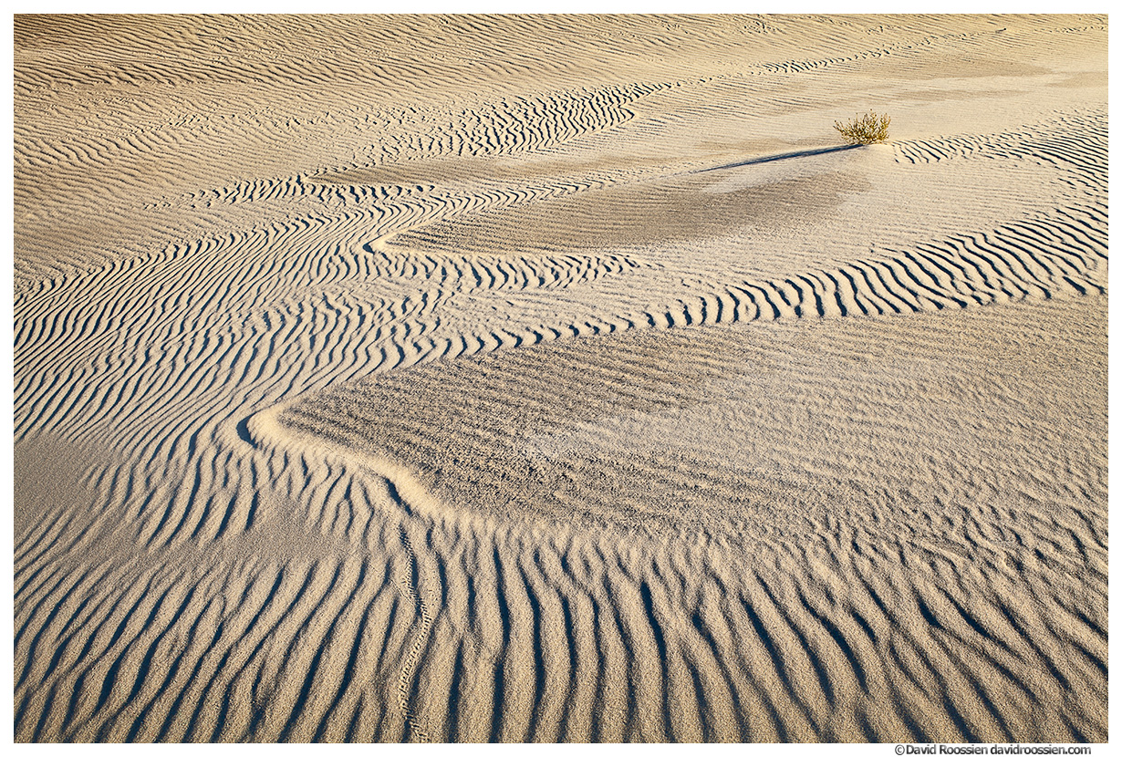 Alone in the Valley, Silver Lake Sand Dunes, Michigan