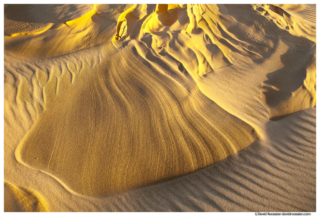 Sand Shell, Silver Lake Sand Dunes, Michigan