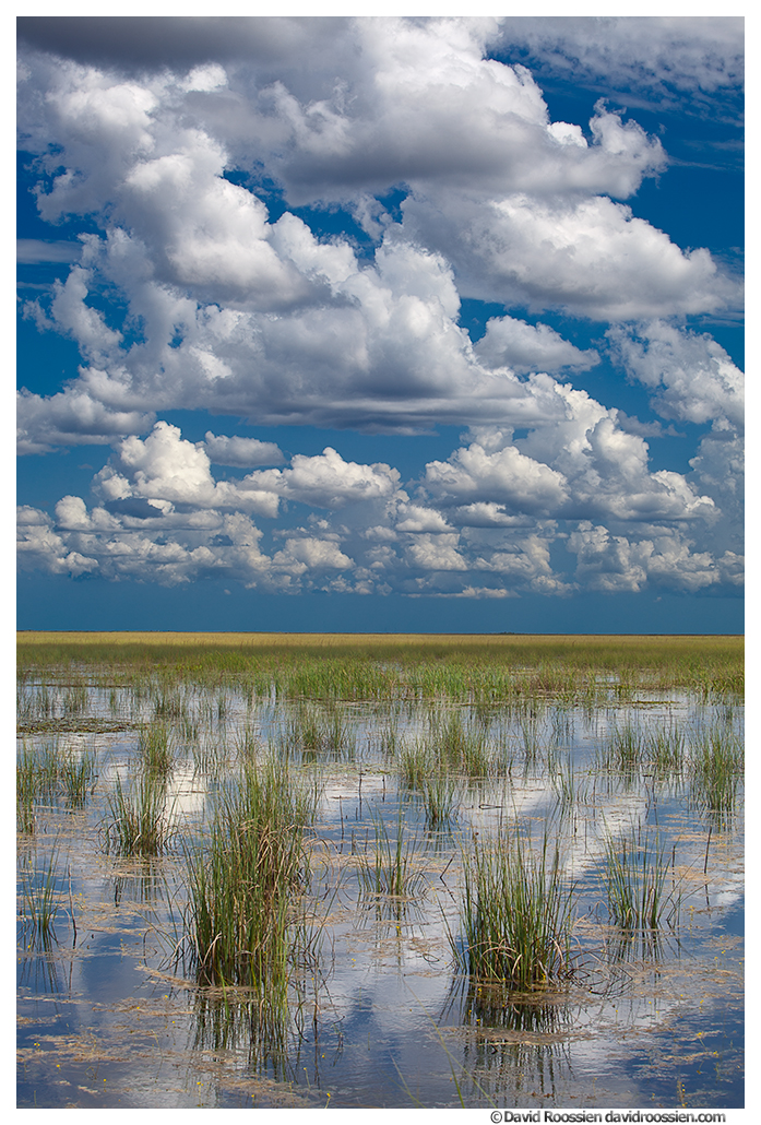 Summer Clouds and Reflections, Florida Everglades Wildlife Management Area, Florida, Summer 2014