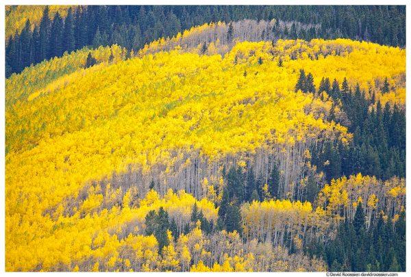 Aspens near Maroon Bells, Colorado
