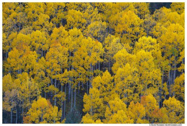 Aspen Tops, Aspen, Colorado
