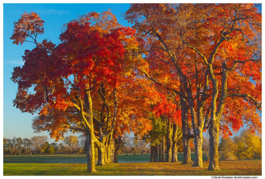 Fall Colors, Belton, Missouri