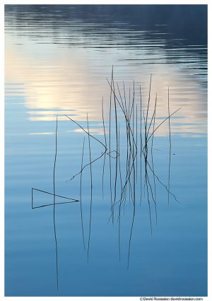 Blue Reeds, Bubble Pond, Acadia National Park, Maine