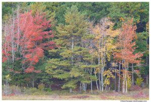 Fall Colors, Witches Hole, Acadia National Park, Maine