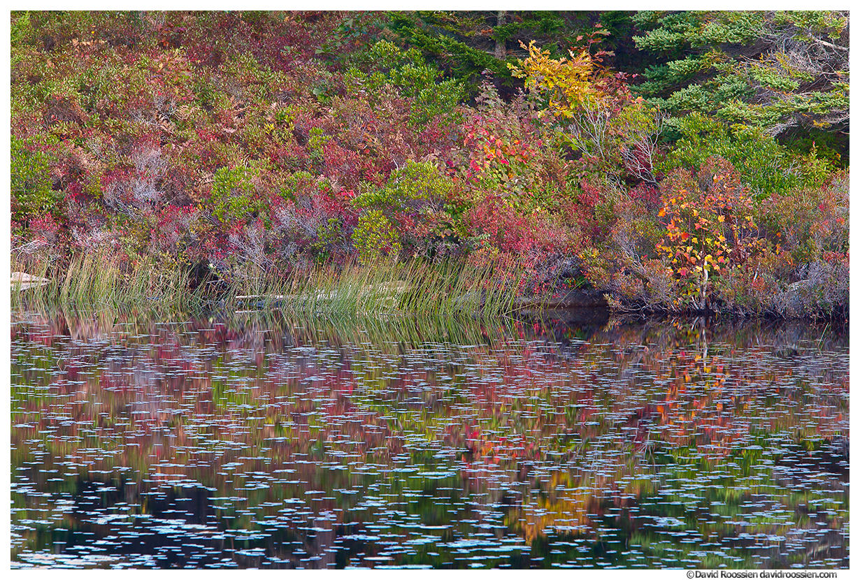 Ground Cover Reflection, Witches Hole Pond, Acadia National Park, Maine