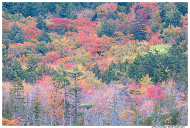 Fall Colors, Upper Hadlock Pond, Acadia National Park, Maine