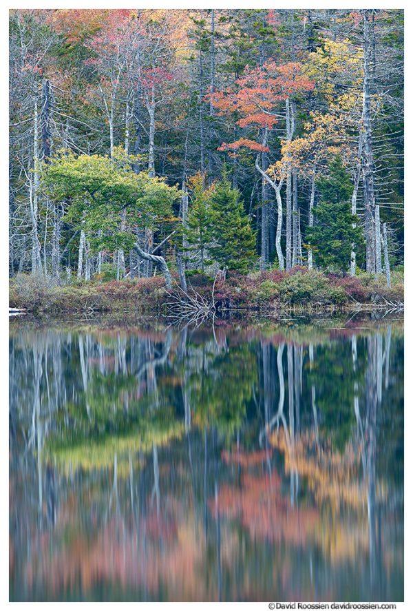 Reflection, Upper Hadlock Pond, Acadia National Park, Maine
