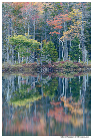 Reflection, Upper Hadlock Pond, Acadia National Park, Maine