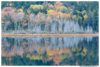 Flooded Marsh Reflection, Upper Hadlock Pond, Acadia National Park, Maine
