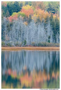 Flooded Marsh Reflection, Upper Hadlock Pond, Acadia National Park, Maine