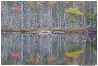 Barren Reflection, Upper Hadlock Pond, Acadia National Park, Maine