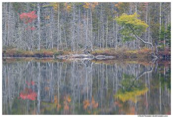 Barren Reflection, Upper Hadlock Pond, Acadia National Park, Maine