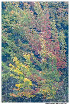 Fall Foliage, Acadia National Park, Maine