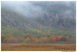 Fall Colors Below Foggy Precipice, Acadia National Park, Maine