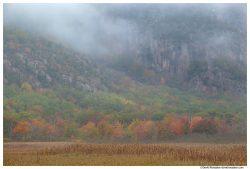 Fall Colors Below Foggy Precipice, Acadia National Park, Maine