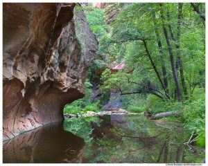Oak Creek Canyon in Summer, Sedona, Arizona