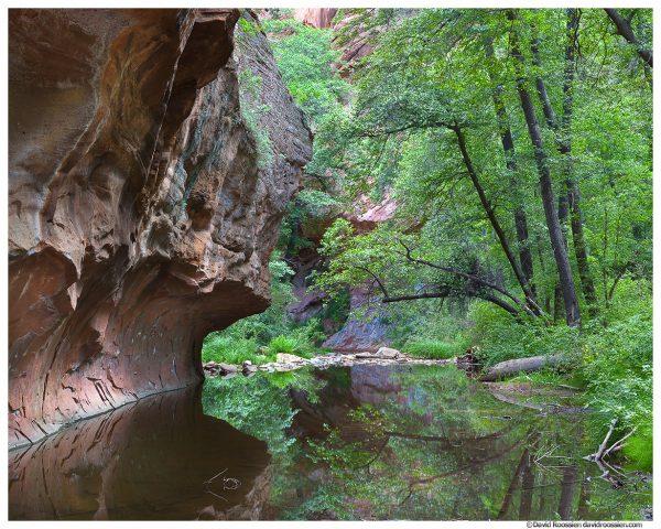 Oak Creek Canyon in Summer, Sedona, Arizona
