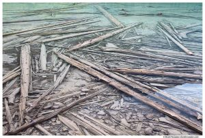 Submerged Logs, Avalanche Lake Bottom, Glacier National Park, Montana