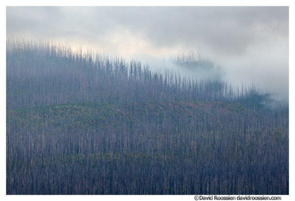 Burned Trees in Fog, Lake McDonald, Glacier National Park, Montana
