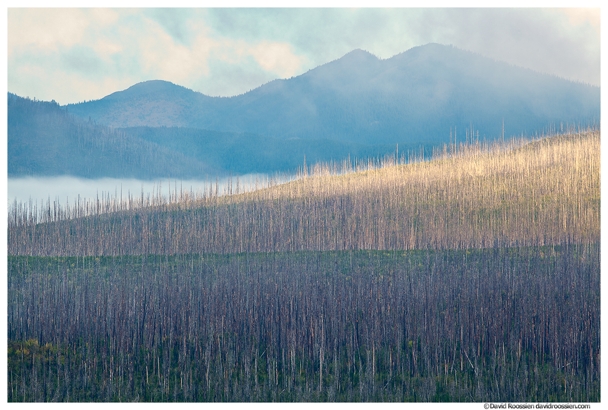 Wildfire Scorched Trees and Apgar Mountains, Lake McDonald, Glacier National Park, Montana