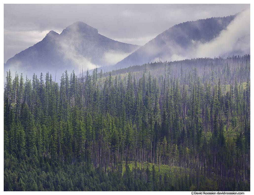 Southeast Glacier, Fog and Trees, Glacier National Park, Montana