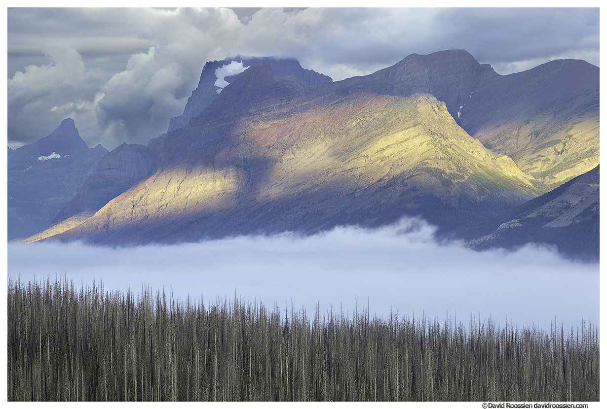 Storm Light, Wildfire Scorched Trees, Valley of Fog, Saint Mary, Glacier National Park, Montana