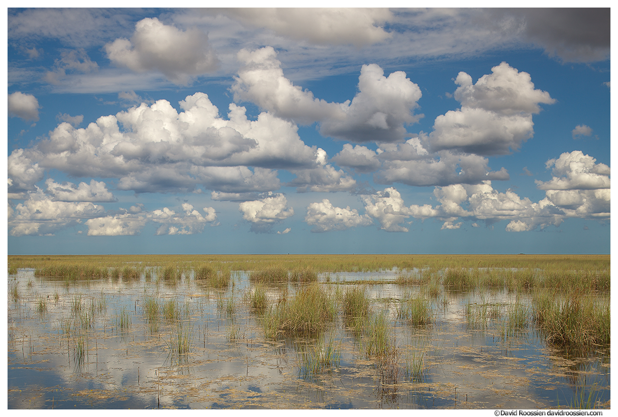 Wetlands and Monsoon Clouds, Florida Everglades