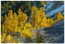 Golden Larches and Talus Slope, Carne Mountain, Trinity, Washington