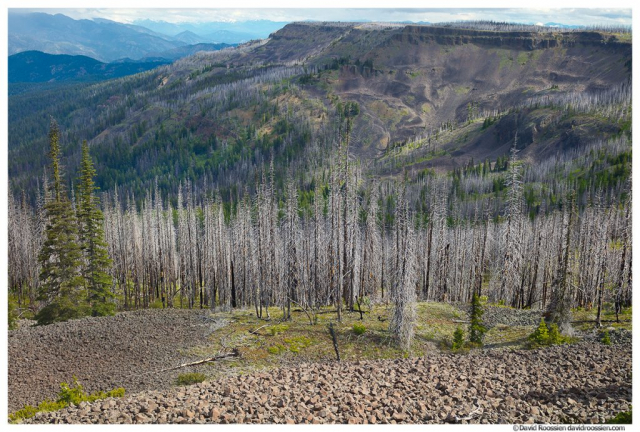 Survivors and Scorched Trees, Lion Rock, Table Mountain, Liberty, Washington State