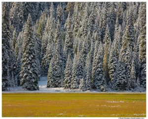 Tucquala Lake, Winter Trees and Wetland, Cle Elum, Washington State
